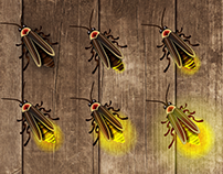 Firefly sequence
