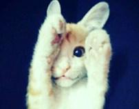 Cat & Dog Photography