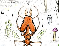 Atta formicidae