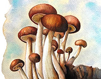 Mushrooms Watercolor