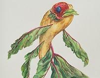 Fruit Fish (Fall 2014)