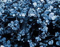 Cyanotype Photography [pt.30]