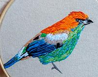 Achará bird