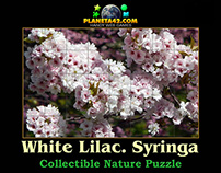 Nature Puzzles : Collectible Plants
