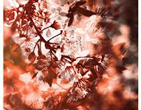 CHAPTERS - Dead Poets Album + Branding Identity