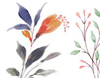 Flora: Hand-painted Watercolor Floral Elements