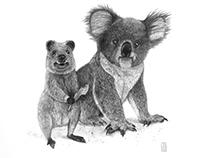 Quokka-Koala