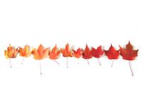 Fall Colors I CCS