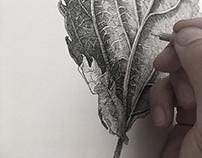 Blaar (Leaf)