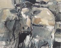 Q Cows