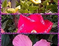 Neueste Rosen und Blumen