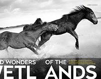 Getaway KLEINMOND HORSES