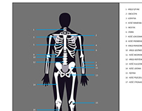 Posters - The human body - CDV