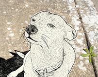 PETS/digital illustrations