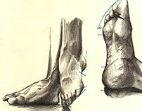 Anatomy Studies- Feet and Hand