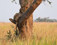 Uganda Wildlife Travel