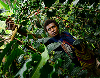 Papua New Guinea Coffee Project