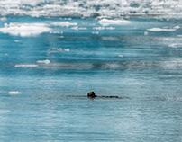 Alaska, Sea otters