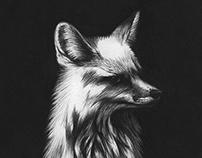 Bic Pen Fox