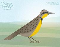 Aves. Parque ecoturístico Corral de Piedra