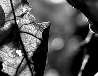 Autumn in b&w