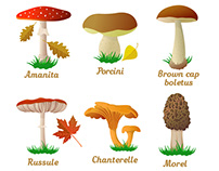 Illustrations of mushrooms in a flat style
