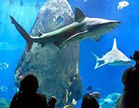 Tennessee Aquarium  Shark Exhibit Launch