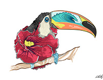 Textures and Toucans