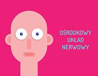 CENTRAL NERVOUS SYSTEM / Ośrodkowy Układ Nerwowy