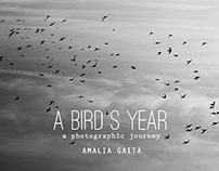 A bird's year