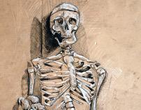 Skeleton Still Life