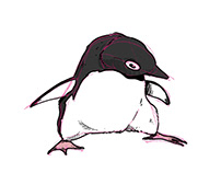 Penguin Sketch