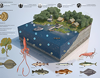 Fishery complex of Sakhalin region