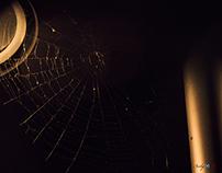 Araña en el faro