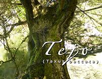 TEJO (taxus baccata)