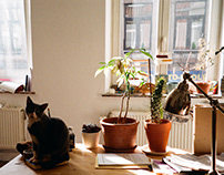 photo / HOME