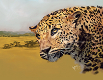 Big Cats - Leopard