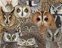 OWLS / Strigiformes