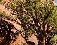 Sedona Desert 2016