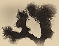 JOSHUA . TREE . PARC .