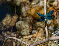 winged creatures || Criaturas aladas