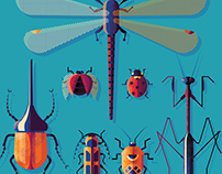 Beauty Bugs