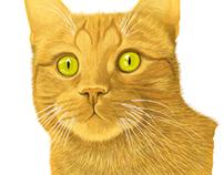 Enska The Cat