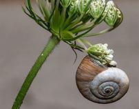 Snail symphony...