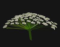 Bloomtober Digital Illustrations