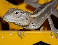 Animals of Sri Lanka