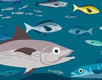 CNTL | Sortie pêche