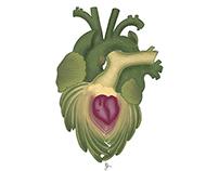 Hearts (cor, cordis)