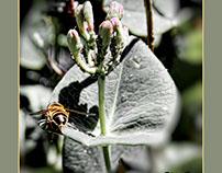 Floral visitors