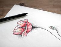 Poppy & dots